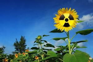 jaderná energie - V Japonsku začala Operace Slunečnice - JE Fukušima (radioaktivni slunecnice) 1