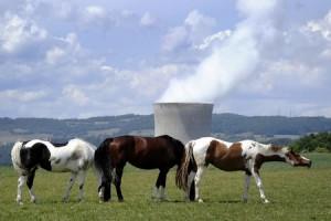 """jaderná energie - Švýcarské """"ne"""" jaderné energii nemusí být definitivní - Životní prostředí (svycarsko kravy elektrarna) 1"""