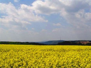 Pole plodin, určených pro biopaliva. Zdroj: negativ66.cz