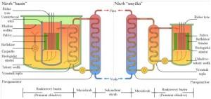 Obr. č. 3: Srovnání dvou konstrukčních možností vjaderném reaktoru využívající sodík jako chladivo – bazén vpravo a smyčka vlevo.