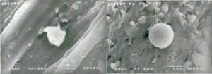 Obrázek 3: Snímky povrchu mechu získané z elektronového mikroskopu, nalevo částice železa snečistotou hořčíku a napravo čisté železo.