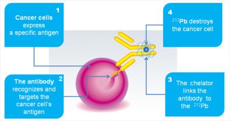 Jednoduchý obrázek vysvětlující základní princip radioimunoterapie typu alfa. Rakovinná buňka představuje specifický patogen, který příslušná protilátka rozpozná a zaměří se na její antigen. Díky navázání protilátky, nosiče radioizotopu Pb-212, přímo na rakovinnou buňku, může být tato buňka posléze zničena. (Zdroj: Arevamed.areva.com)