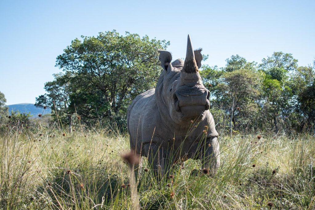 Jeden z ohrožených nosorožců v JAR. (Zdroj: Rosatom)