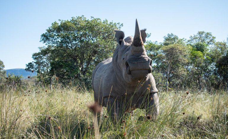 jaderná energie - Jaderné technologie pro záchranu nosorožců - Věda a jádro (IMG 2622) 1
