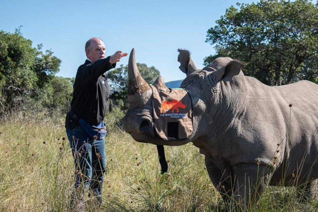 Odchyt nosorožce kvůli implantaci stabilního prvku do jeho rohu v rámci projektu Rhisotope. (Zdroj: Rosatom)